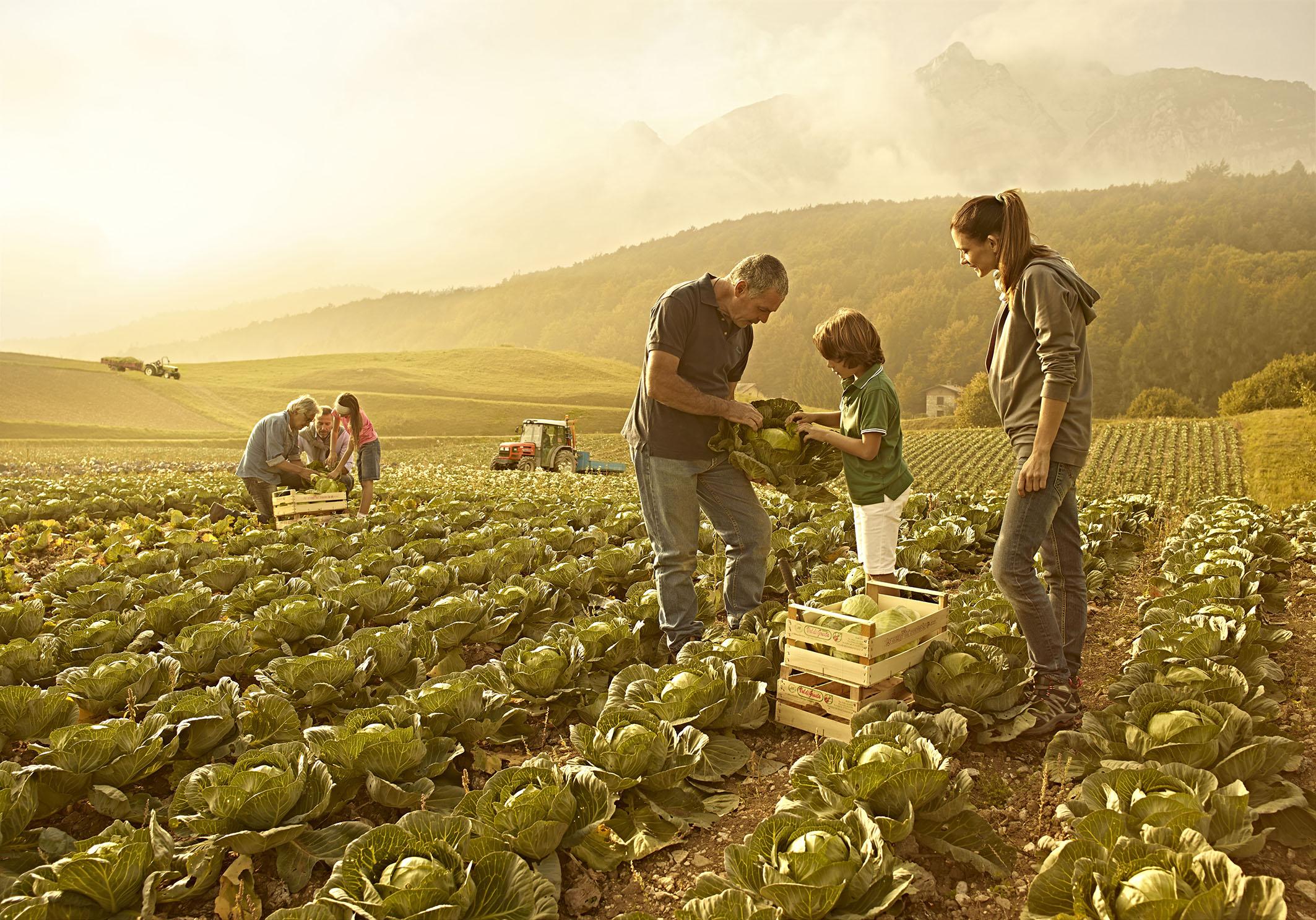 Agricoltura: un passo avanti per i prodotti bio-campani.